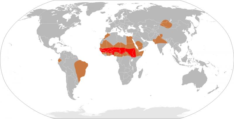 Karte: Verbreitungsgebiete der Meningits